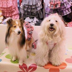 画像2: テッキングタータン☆フリルワンピ(ピンク)・4号